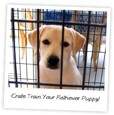 crate train your retriever puppy