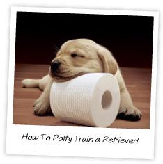How to potty train a retriever