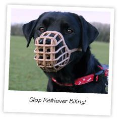 stop retriever biting