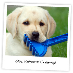 stop retriever chewing