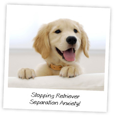 Stopping Retriever Separation Anxiety