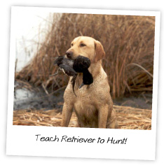 teach a retriever to hunt